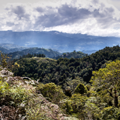 FNC Takes Measures to Help Colombian Coffee Growers Affected by El Niño