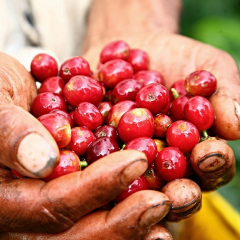 Colombian Coffee Production was 944,000 Bags in March