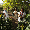 Colombian Coffee Production Rises 5% During the Last 12 Months