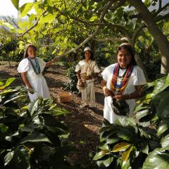 Producción de Café de Colombia crece 5% en últimos 12 meses