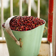 Transparency and Accuracy of Colombian Coffee Statistics are Recognized