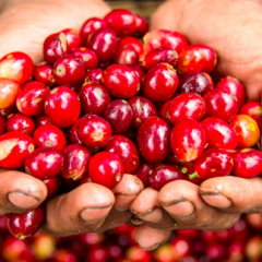 Colombian coffee production reaches 14.3 million bags in last 12 months