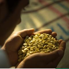 En abril producción de café colombiano creció 13%