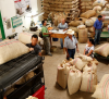 Colombian Coffee Production Rises 9% in August