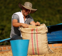 Colombian Coffee Production Increased 13% in April