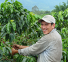 FNC and ILO: Adapting Labor Regulations to the Realities of the Colombian Coffee Growing Sector