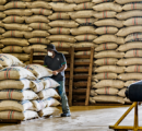 Colombian Coffee Production Reached 14.2 million Bags in 2016